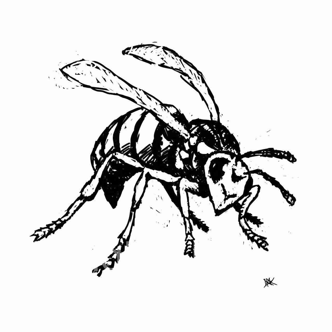 Drawing of a wasp.
