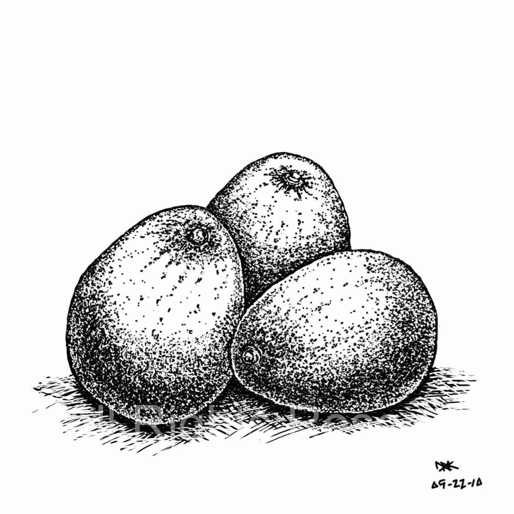 Drawing of Avacados