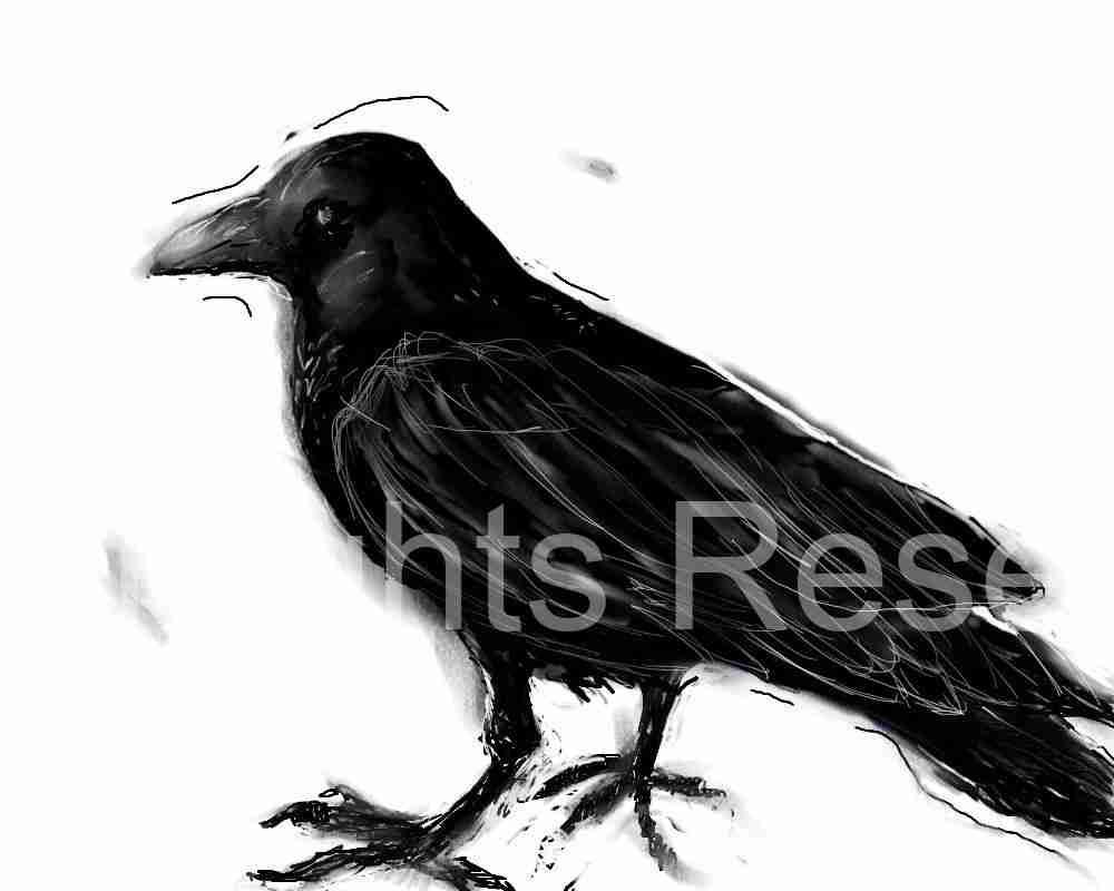 Crow52910