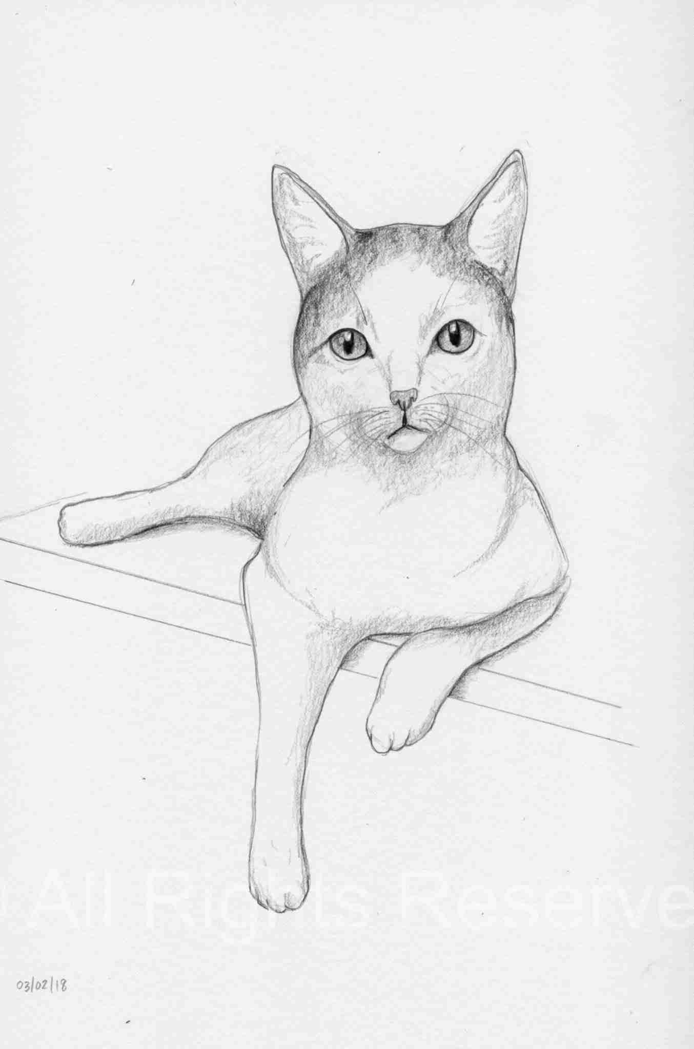 Cat Doodle 38 – Lilikoi