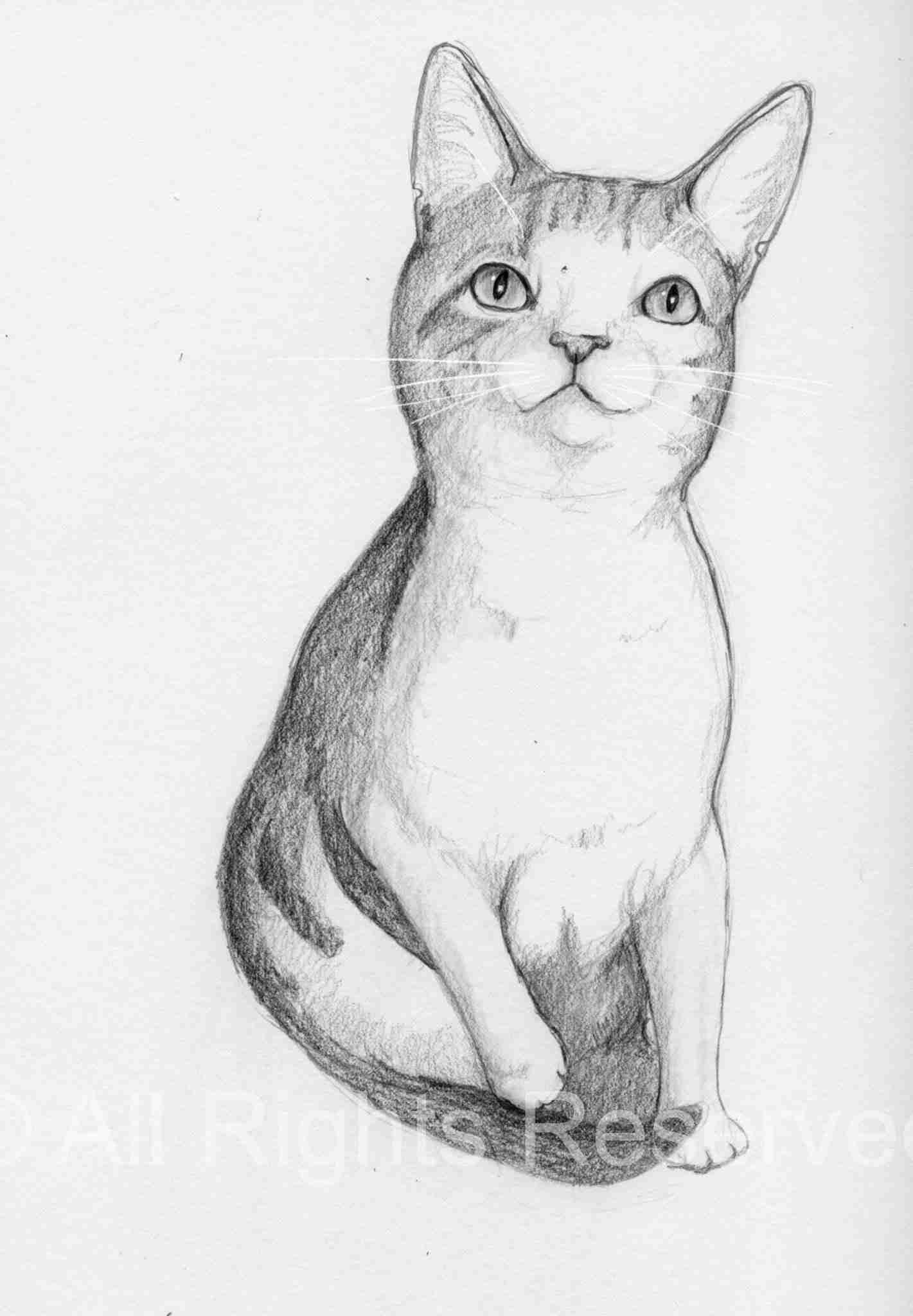 Cat Doodle 39 – Sugar [Adopted!]