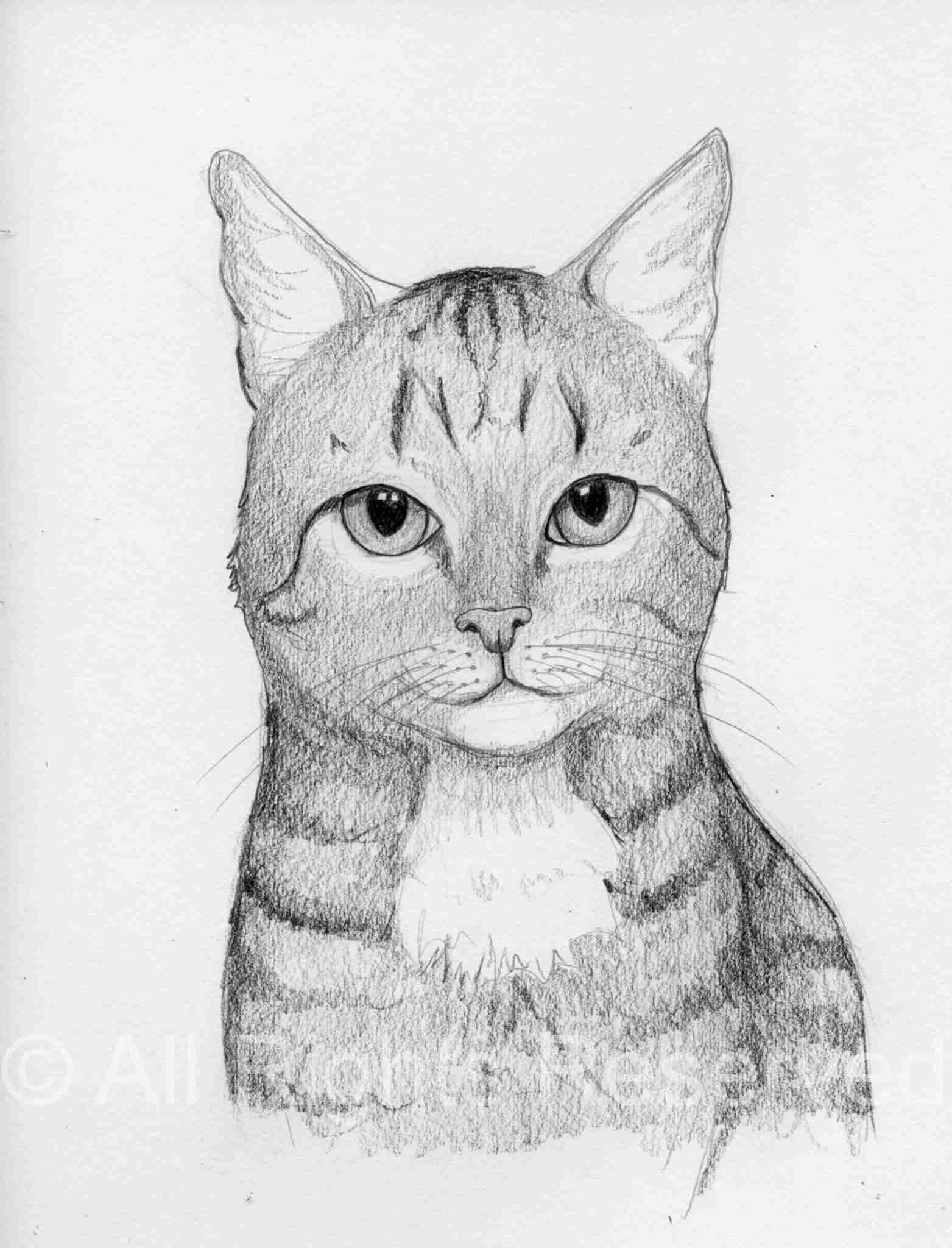 Cat Doodle 41 – Chief
