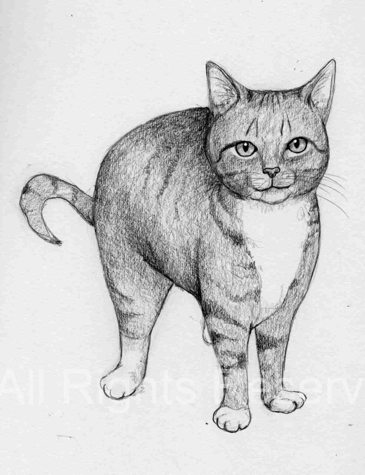 Cat Doodle 47 – Tito [Adopted!]