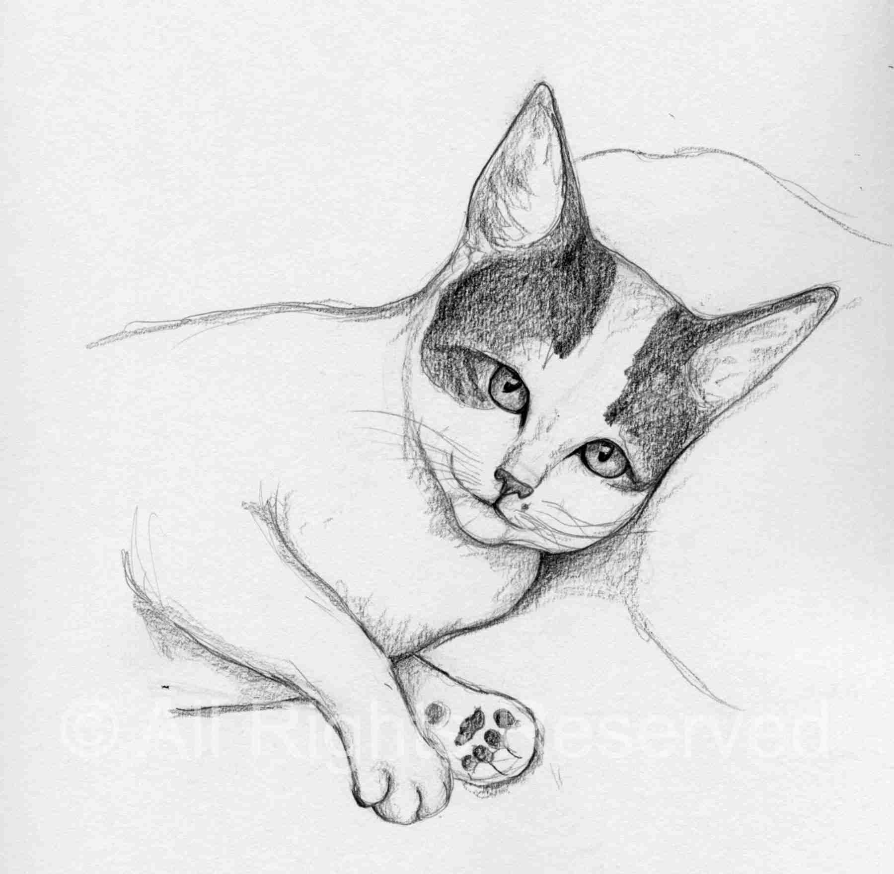 drawing of a cat lying on her side