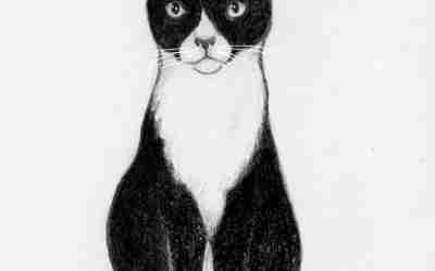 Cat Doodle 50 – Delamaine [Adopted!]