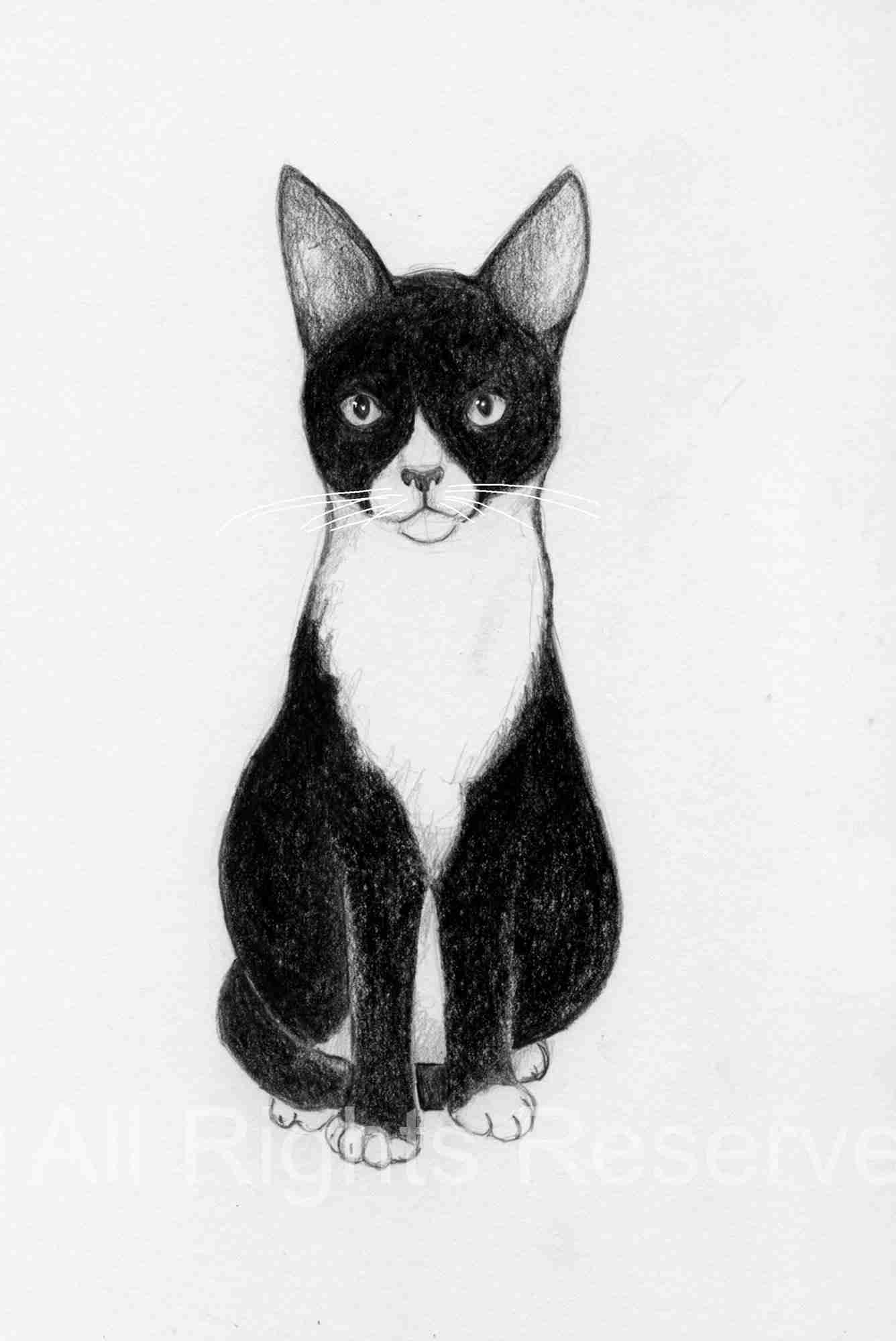 Drawing of a black and white kitten