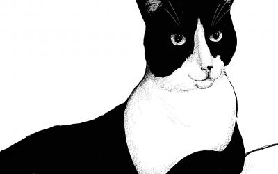 Cat Doodle – Bob