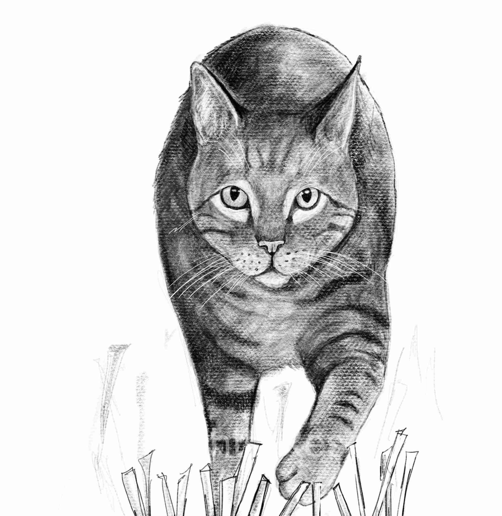 Cat Doodle 55