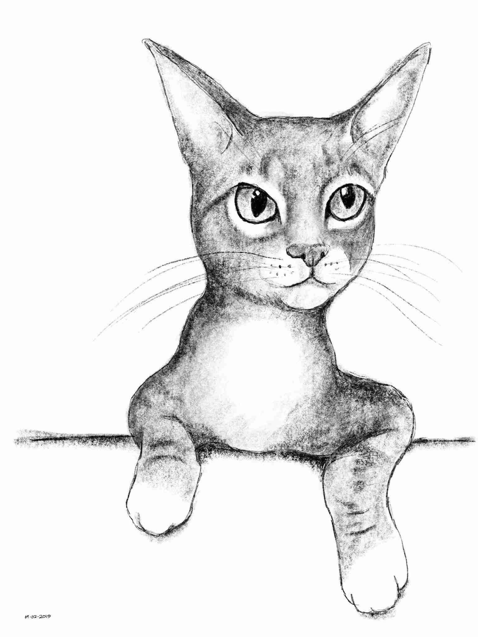 Kitten Elvis Drawing