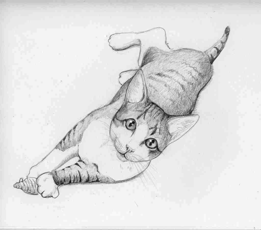 drawing of a tabby cat playing with a toy mouse