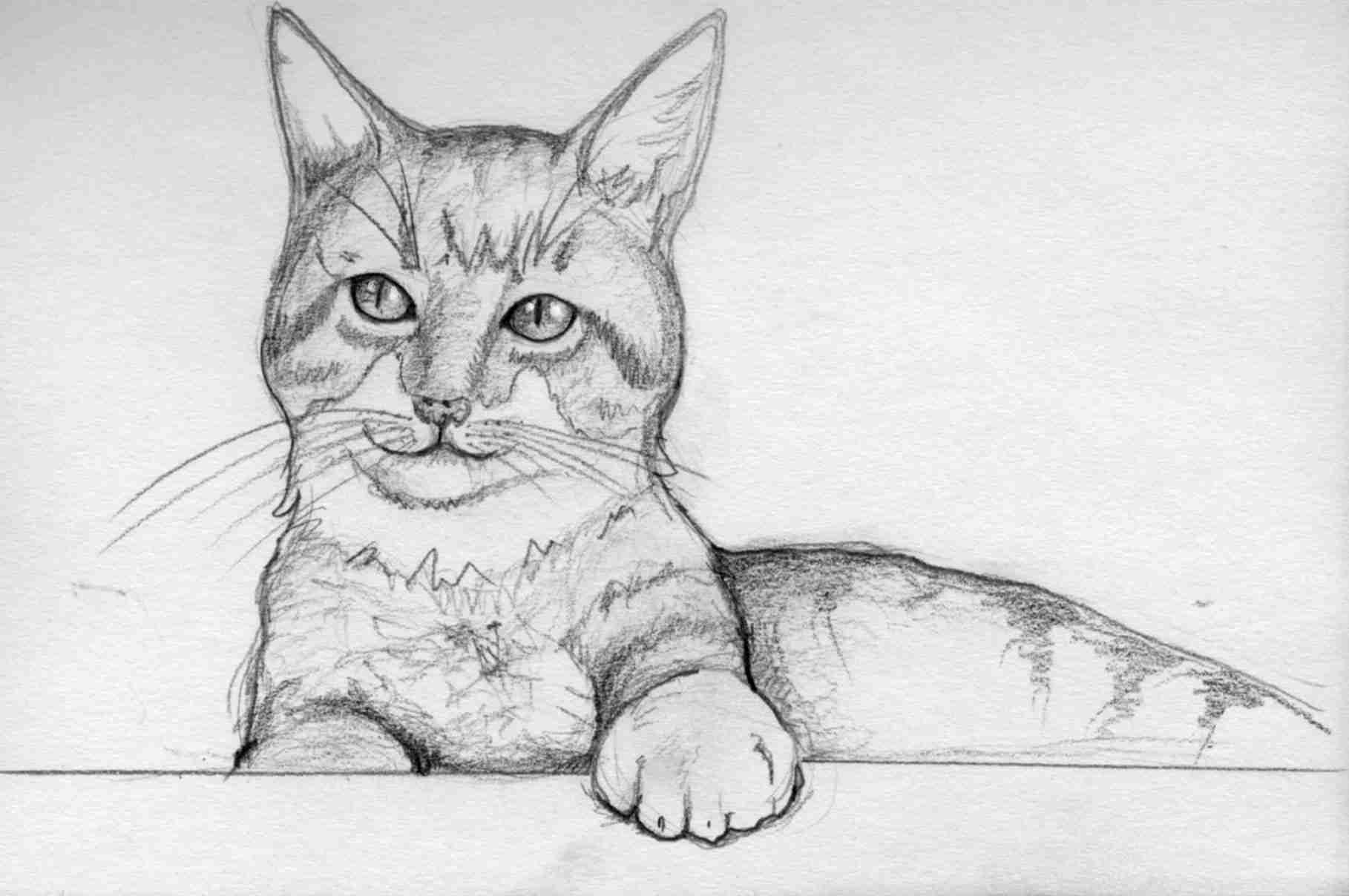 drawing of a tabby cat